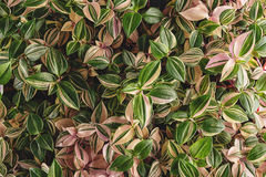 Leaves detail, macro photography of plant, green plant detail Royalty Free Stock Photo