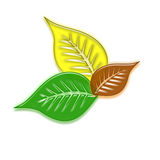 Leaves. Of different color, green, yellow and brown royalty free illustration