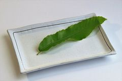 It leaves for dishing of cuisine. Serve the dish on top of the leaves of the dish Stock Photography
