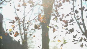Leaves disperse in the air in slow motion after two girls throw it really high. Two young women throw, run and kick the autumn leaves high into the air stock video footage