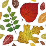Leaves doodle. Vector autumn doodles seamless pattern with leaves. Use for wallpaper, pattern fills, web page background vector illustration
