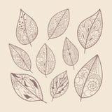 Leaves doodle. Vector doodle leaves set. Hand drawn artwork royalty free illustration