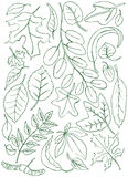 Leaves doodles Stock Photos