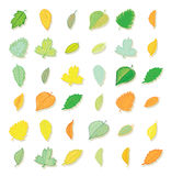 Leaves doodles set. Vector hand drawn  illustration. Stock Photos