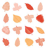 Leaves doodles set. Vector hand drawn  illustration. Royalty Free Stock Image