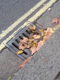Leaves on a drain Royalty Free Stock Photo