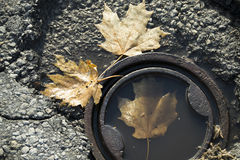 Leaves in a Drain Stock Photos