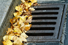 Leaves in the drain grate. A background of leaves in the grate stock photos
