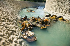 Leaves in drainage ditch Stock Photography
