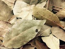 Leaves. Dried leaves plants royalty free stock photos