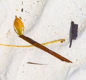 Leaves and driftwood on a white sandy beach Royalty Free Stock Photo