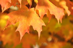 Leaves Dripping with Orange Color Stock Photo