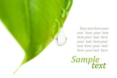Leaves with drop Royalty Free Stock Photo