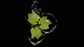 Leaves drop. Leaves enclosed in water balls. Refreshing 3d illustration stock illustration