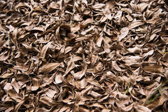 Leaves dry. Background fall nature leaf ground brown season Stock Photo