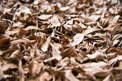 Leaves dry Stock Photography