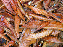 Leaves. Dry leaves piled on the ground Royalty Free Stock Image