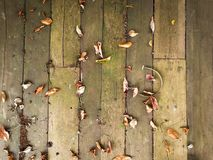 Leaves dry Wooden floor background Royalty Free Stock Images