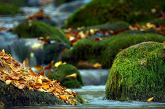 Leaves in the edge of the river. Leaves in the edge of the mountain river Stock Photos