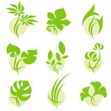 Leaves. Elements for design. Vector illustration Stock Photos