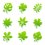 Leaves. Elements For Design. Stock Photography