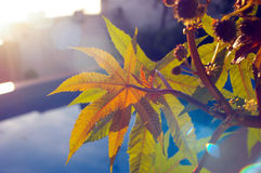 Leaves in the evening light. This photo was shot in my garden Royalty Free Stock Images