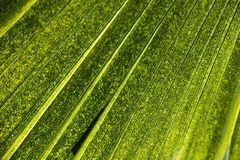leaves för acaciabakgrundsgreen arkivfoto