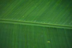 leaves för acaciabakgrundsgreen Arkivfoton