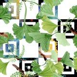 leaves för bilobaginkgogreen Uppsättning för vattenfärgbakgrundsillustration Seamless bakgrund mönstrar royaltyfria foton