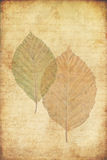 leaves för höstbakgrundsgrunge Arkivfoton