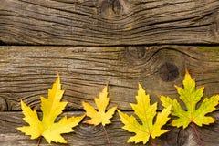 leaves för höstbakgrundskopia över träavstånd fall Trä med kopieringsutrymme Royaltyfria Bilder