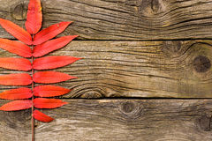 leaves för höstbakgrundskopia över träavstånd fall Trä med kopieringsutrymme Royaltyfri Fotografi