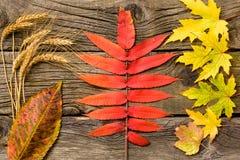 leaves för höstbakgrundskopia över träavstånd fall Trä med kopieringsutrymme Fotografering för Bildbyråer