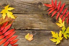 leaves för höstbakgrundskopia över träavstånd fall Trä med kopieringsutrymme Arkivbilder