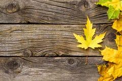 leaves för höstbakgrundskopia över träavstånd fall Trä med kopieringsutrymme Royaltyfria Foton