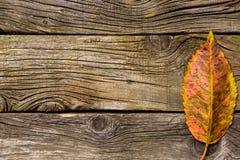 leaves för höstbakgrundskopia över träavstånd fall Trä med kopieringsutrymme Arkivfoto
