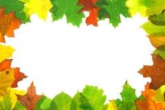 leaves för höstfallram Fotografering för Bildbyråer