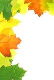 leaves för höstfallram Arkivfoton