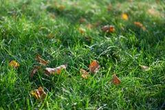 leaves för höstgräsgreen arkivbilder