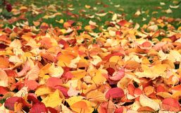 leaves för höstgräsgreen Royaltyfria Bilder