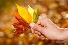 Leaves för handholdinghöst. arkivbild