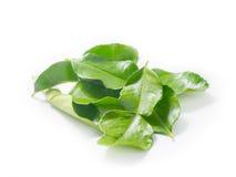 leaves för kaffir för bakgrundsmat kalkar ingredienser isolerade thai white Arkivbild
