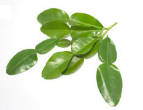 leaves för kaffir för bakgrundsmat kalkar ingredienser isolerade thai white Royaltyfria Foton