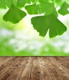 leaves för leaf för bilobafokusginkgo blir grund Arkivfoton
