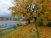 2008 leaves för leaf för dunge för torr fall för lufthöst guld- nära oaken oktober russia vänder som spolar yellow Royaltyfri Fotografi