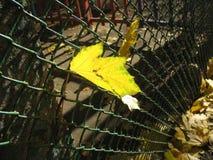 2008 leaves för leaf för dunge för torr fall för lufthöst guld- nära oaken oktober russia vänder som spolar yellow Arkivfoto