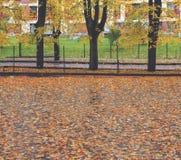 2008 leaves för leaf för dunge för torr fall för lufthöst guld- nära oaken oktober russia vänder som spolar yellow Royaltyfri Foto
