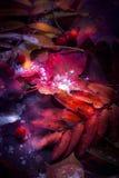 leaves för leaf för ram för abstrakt höstbakgrund färgrika Arkivfoto
