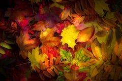 leaves för leaf för ram för abstrakt höstbakgrund färgrika Royaltyfri Fotografi