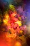leaves för leaf för ram för abstrakt höstbakgrund färgrika Royaltyfria Bilder